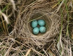 Imidacloprid's effects in birds: thinner egg shells