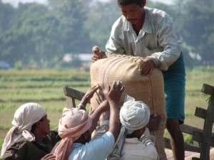 Consequence of migration: lack of farm labourers