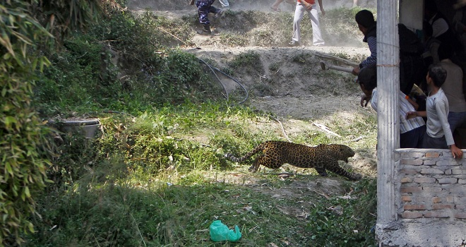 Wild animal attacks: where nature and locals collide